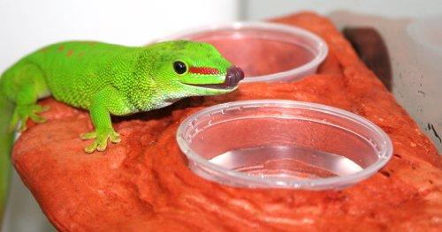 Magnaturals Gecko Ledge Mojave - Magnetic Decor by Magnaturals