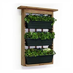 Amazoncom Algreen 34002 Garden View Vertical Living Wall