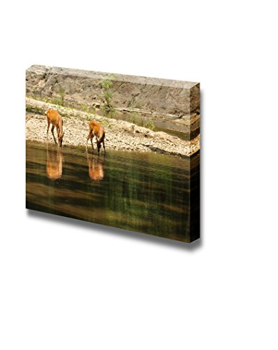 (wall26 - Canvas Prints Wall Art - Deers Drinking Water at River, Wild Thailand | Modern Wall Decor/Home Decoration Stretched Gallery Canvas Wrap Giclee Print. Ready to Hang - 16
