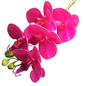 jiumengya 10pcs Real Touch Mini Orchid Flower PU Cymbidium Five Heads PU Fuchsia Color Orchid Flowers 70cm/27.56 inches for Wedding Centerpieces Decorative Flowers (Fuchsia) 45