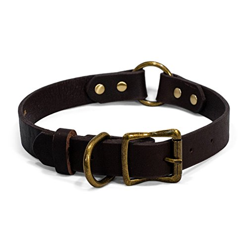 ium Heavy Duty Leather Dog Collar - Sturdy Brass Colored Buckle and Rivets - Safety O-Ring for Active Dogs Outdoor Co (21 Inch) (Coloured Leather)