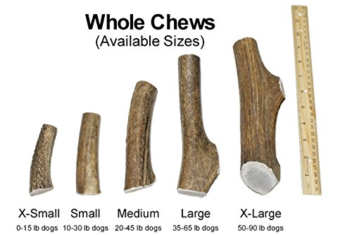 Large, Whole, Single Pack - Grade A Premium Elk Antler Dog Chew for 35 to 65 lb dogs – Naturally shed from wild elk – No Mess, No Odor – Made in the USA by Elkhorn Premium Chews (Image #2)