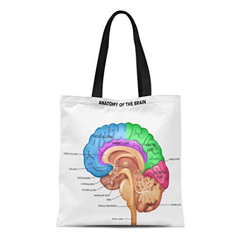 - Semtomn Canvas Tote Bag Shoulder Bags Parts Human Brain Lobes Beautiful Colorful Detailed Anatomy Sagittal Women's Handle Shoulder Tote Shopper Handbag