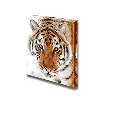 Canvas Prints Wall Art - Beautiful Wild Siberian Tiger on Snow Wild Animal/Beast Photograph | Modern Wall Decor/Home Decoration Stretched Gallery Canvas Wrap Giclee Print & Ready to Hang - 24