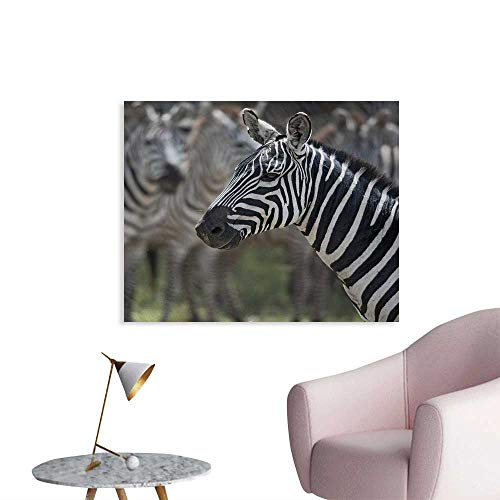 Tudouhoho African Cool Poster Zebra in Serengati National Park Safari Animal in Desert Picture Art Stickers Black White Reseda Green W28 xL20]()