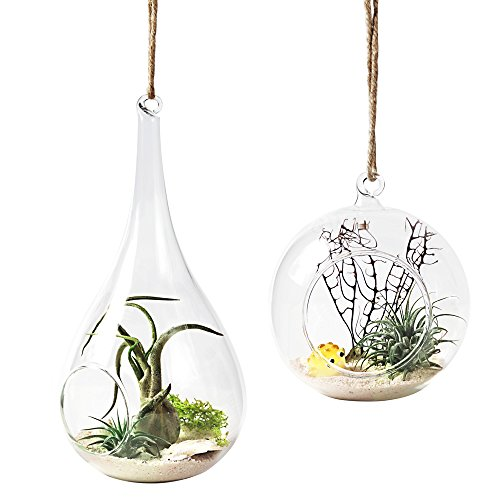 Mkono 2 Pack Glass Hanging Planter Air Plant Terrarium Home Decorations for Succulent Candles, Globe and Teardrop (Terrarium Plants And Containers)