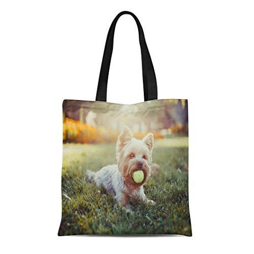 Semtomn Canvas Tote Bag Shoulder Bags Brown Dog Beautiful Yorkshire Terrier Playing Ball on Grass Women's Handle Shoulder Tote Shopper Handbag