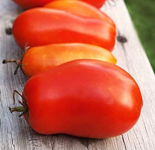 Roma Tomato Seeds - Italian Heirloom Garden Variety