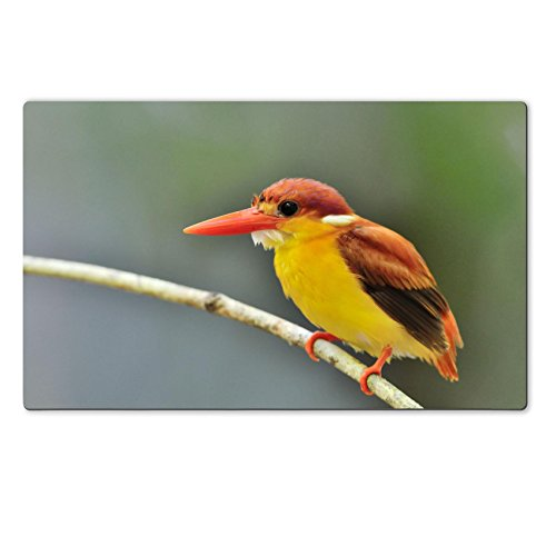 Luxlady Large TableMat IMAGE ID 31333271 Bird Rufous backed Kingfisher Thailand