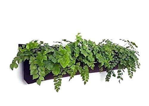 Delectable Garden 5 Pocket Waterproof Indoor Horizontal Planter