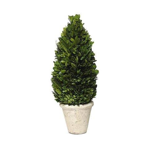 Tradingsmith Preserved Boxwood Cone Tree Topiary 12