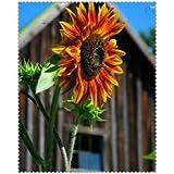 New Sunflower , SKYSCRAPER , 18 FEET TALL ! Giant Skyskraper Huge , 12 + Seeds !