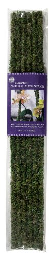 SuperMoss (22051) Moss Stakes Preserved, Fresh Green, 24