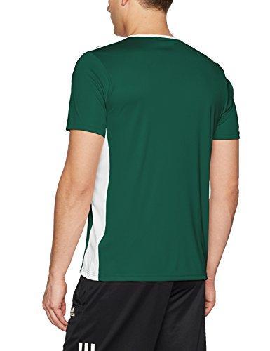 Collegiate T shirt Adidas Entrada Green white Uomo 18 6zRwHPFa