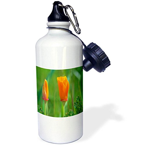 3dRose Danita Delimont - Flowers - California golden poppies about to bloom - 21 oz Sports Water Bottle (wb_258873_1) - California Golden Poppy