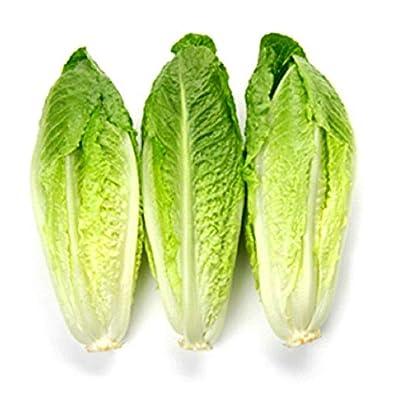 Lettuce Seeds - Paris Island Cos - Heirloom Vegetable - Organic - 100 Seeds : Garden & Outdoor
