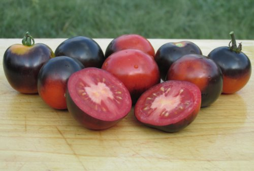 Indigo Rose Tomato Seeds- Organic- Purple/Blue Cherry Variety- 25+ Seeds