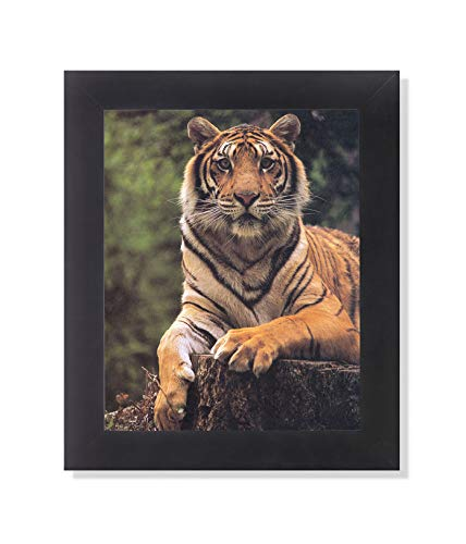 Tiger Laying on Tree Stump Close Up Photo Wall Picture Framed Art - Print Lithograph Tigers