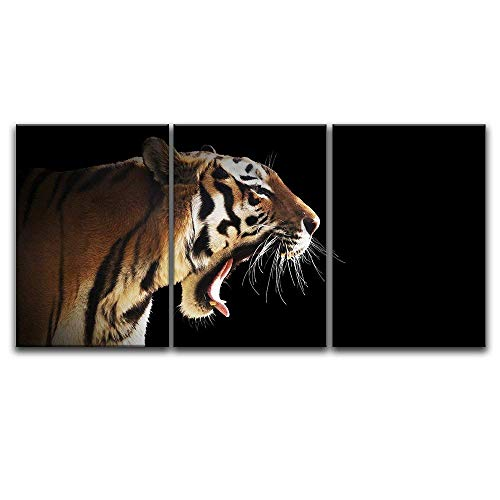 3 Panel A Tiger on Black Background x 3 Panels