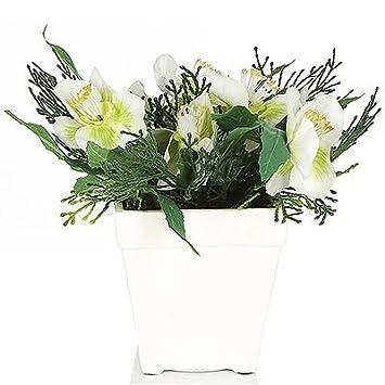 Amazon De Lumida Flora Leuchtende Blumen Christrose Weisser Topf H
