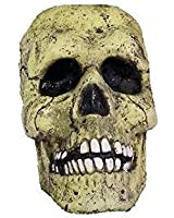 Life Sized Plastic Realistic Skull Prop