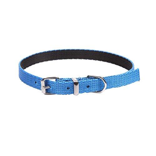 Dingo Dog Collar Handmade Blue with Black Contrast 14576