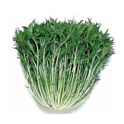 Mizuna Organic Heirloom Seeds : Vegetable Plants : Garden & Outdoor