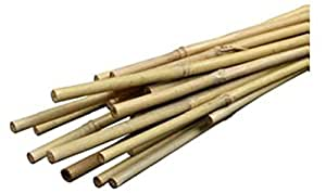 Bond Bamboo Heavy Duty Bamboo Stakes 6 Feet 6 Pack Garden Outdoor
