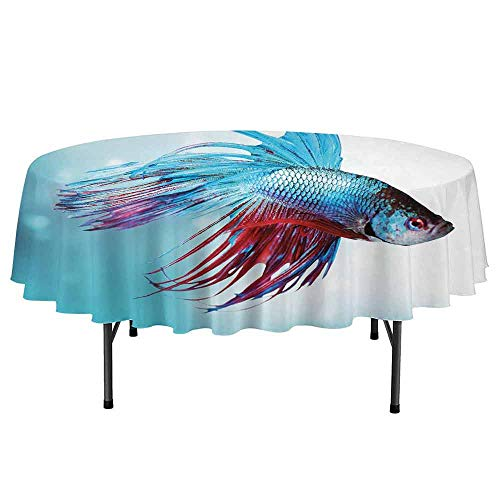 (Aquarium Printed Round Tablecloth Siamese Fighting Betta Fish Swimming in Aquarium Aggressive Sea Animal Desktop Protection pad D70 Inch Sky Blue Dark Coral)