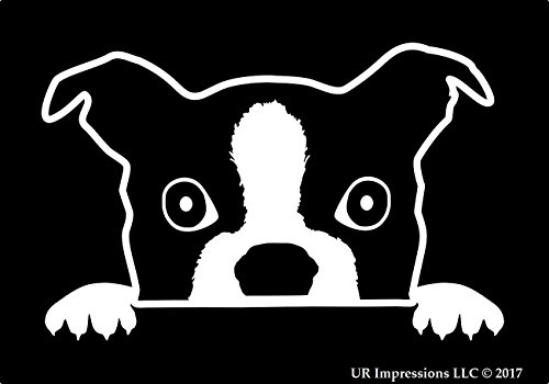 UR Impressions Boston Terrier Peeking Decal Vinyl Sticker Graphics for Cars Trucks SUV Vans Walls Windows Laptop|White|7 X 4.4 ()
