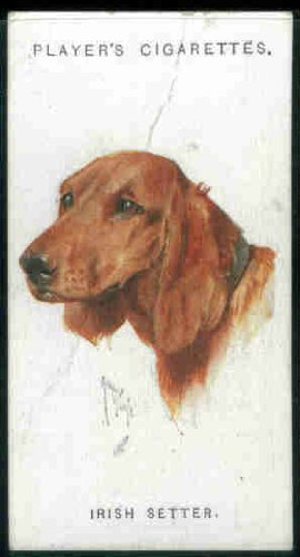 Irish Setter 1927 Player Cigarettes Dogs (Heads) #15 (GOOD+) light crease
