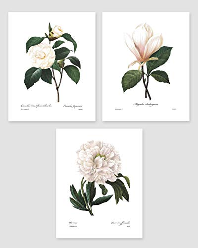 Botanical Prints, 8x10 (White Home Decor Room, Redoute Flower Wall Art, Set of 3) Unframed from Cloud Nine Prints