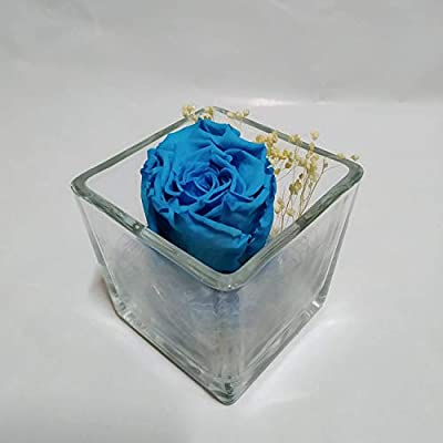 Rosa eterna Azul Claro. Gratis TU ENVÍO. Rosa eterna Azul Claro ...