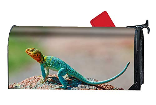 (XW-FGF Crotaphytus Collaris Mexico Lizard Colorful Stone Magnetic Mailbox Cover - 9 x 21 Inches Seasonal Mailbox Wrap)