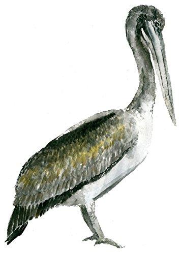 Pelican Wall (Pelican art print (8x10). #A060 Pelican artwork.Pelican watercolor painting.Pelican painting.Pelican wall art.Wall decor.)