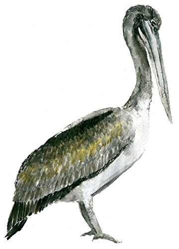Pelican Wall - 6