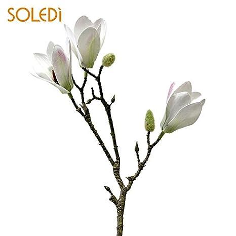 Buy Pinkdose White Unique Yulan Magnolia Flower Yulan Magnolia