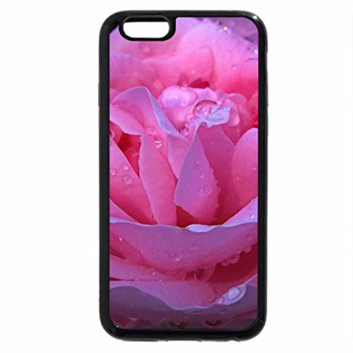 iPhone 6S / iPhone 6 Case (Black) A lovely pink rose with rain drops on it..