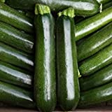 buy IDEA HIGH Kings Seeds - Courgette Midnight F1-15 Seeds now, new 2019-2018 bestseller, review and Photo, best price $7.14