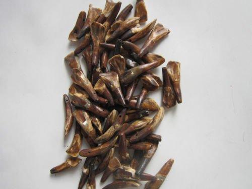 - 20 Drilled Genuine Brown Buffalo Teeth Tooth Beads Pendants Craft