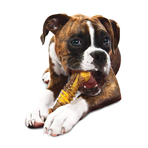Nylabone Flavor Frenzy Souper Dura Chew Cheesesteak Flavored Bone Dog Chew Toy