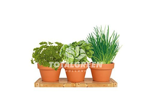 Healthy Kitchen Herb Trio Kit | Easy to Grow Basil, Parsley and Chives Seeds In Your Own Kitchen | Exclusively By TotalGreen Holland