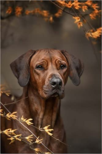 Book Rhodesian Ridgeback Dog Portrait Journal: 150 Page Lined Notebook/Diary