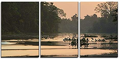 Wall26 3 Piece Canvas Wall Art Trees And Jungle On The Catatumbo River Near The Maracaibo Lake Modern Home Art Stretched And Framed Ready To Hang 24 X36 X3 Panels