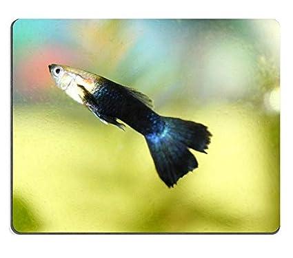 17P00427 Hochwertige Kreativität Mousepad Gaming Mouse Pad EIN männlicher Guppy Poecilia reticulata Süßwasseraquariumfisch