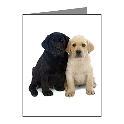d White Labrador Puppies. Note Cards (Pk O - Blank Note Cards (Pk of 10) Matte ()