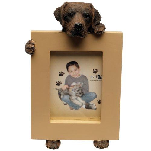 Image of Chocolate Labrador Retriever 2.5