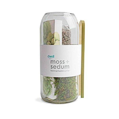 Moss Sedum Vertical Terrarium Bottle Buy Online In Uae