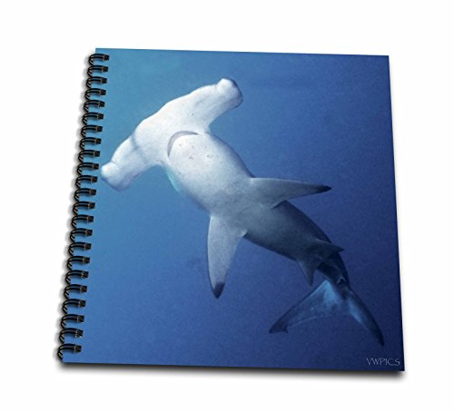 3dRose db_45844_2 Scalloped Hammerhead Shark. Sphyrna Lewini.Galapagos Islands-Memory Book, 12 by 12-Inch