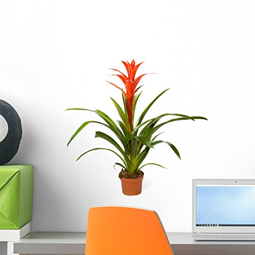 Wallmonkeys Bromeliad Plant Wall Decal Peel and Stick Graphic (18 in W x 18 in H) WM283813